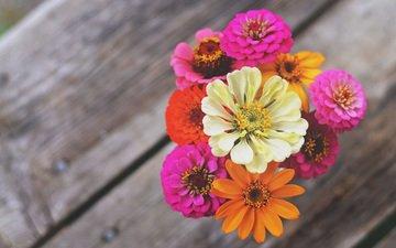 цветы, макро, лепестки, букет, циния, цинии