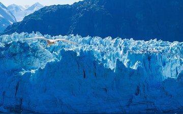 птица, аляска, айсберги, ледники