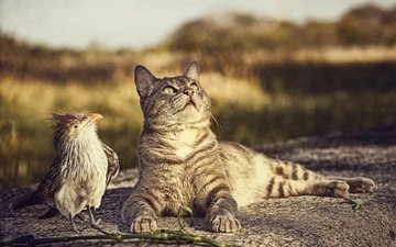 cat, bird, friendship
