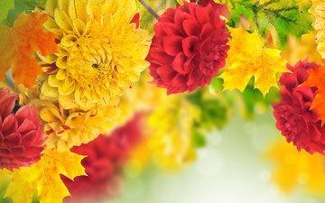 цветы, листья, георгины