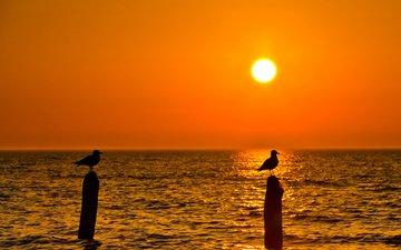 закат, пейзаж, море, птицы, чайки