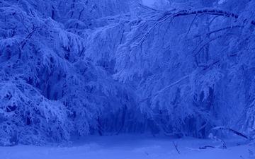 деревья, снег, лес, зима, мороз