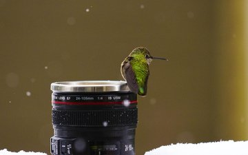 снег, птицы, камера, объектив, колибри