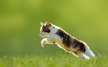 трава, кошка, котенок, прыжок