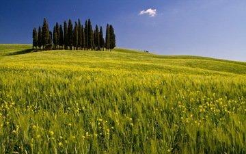 деревья, пейзаж, поле, луг