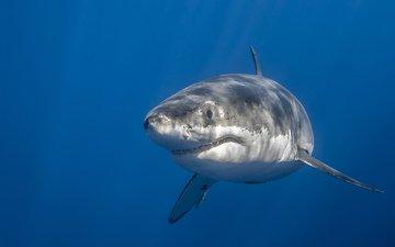 море, акула, подводный мир