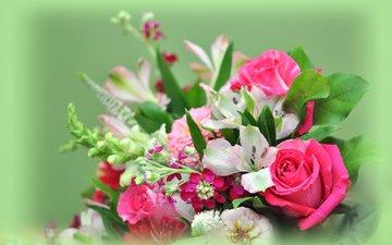 цветы, фон, букет