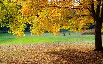 деревья, листья, парк, осень