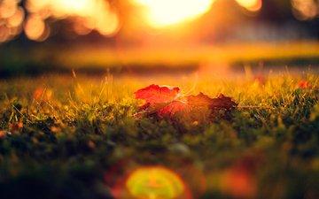 трава, листья, газон