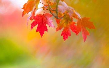 ветка, листья, осень