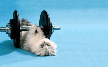kitty, rod