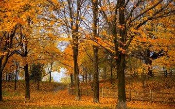 дорога, деревья, природа, лес, листья, парк, осень, тропинка, прогулка, расцветка, деревь, опадают, на природе, осен, автодорога, листья, красочная