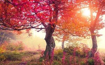 цветы, деревья, лес, осень