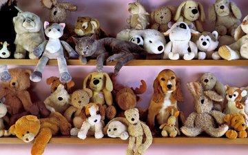 кот, кошка, собака, игрушки, британец, спаниель, полки