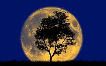 дерево, луна, силуэт, большая, и