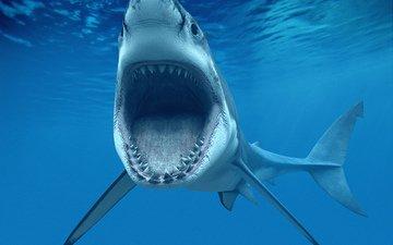 белая акула, или кархародон (carcharodon carcharias, great white shark)