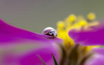 насекомое, цветок, божья коровка