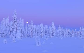 night, trees, snow, winter