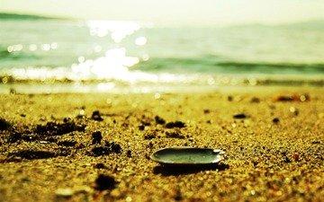 вода, песок, пляж, релакс, ракушка