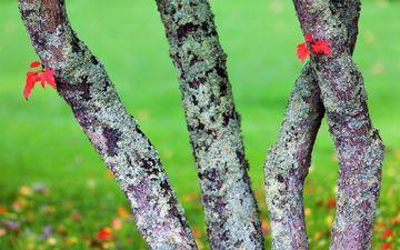 стволы, осень, мох, кора
