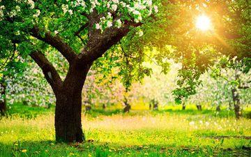 цветы, трава, деревья, солнце, природа, цветение, весна