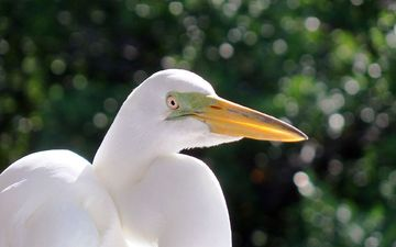 bird, beak, heron