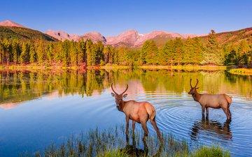 небо, озеро, природа, лес, закат, олени