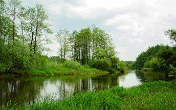 трава, деревья, пейзаж, лето, реки
