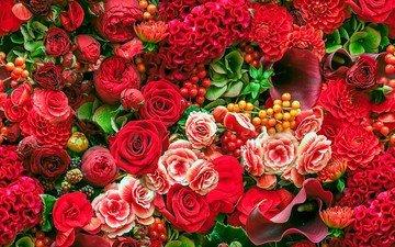 цветы, розы, каллы, георгины, бегонии