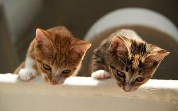 дом, кошки, уют