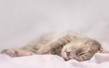 кот, кошка, сон, серый, дом, уют