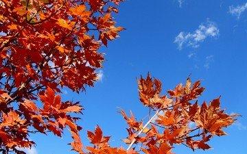 небо, листья, ветки, осень