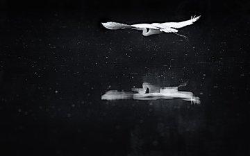 reflection, flight, birds, heron