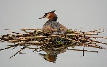 вода, отражение, птица, цапля, птаха, гнздо