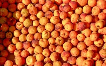 фрукты, много, абрикосы, спелые