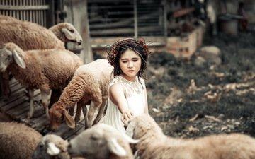 животные, дети, девочка, забота, овцы, венок
