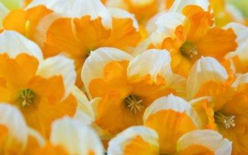 цветы, макро, много