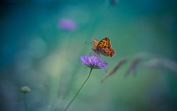 flower, butterfly, insects, blur. background
