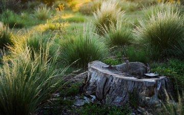 трава, природа, мох, зеленая, пень, пенек, кочки
