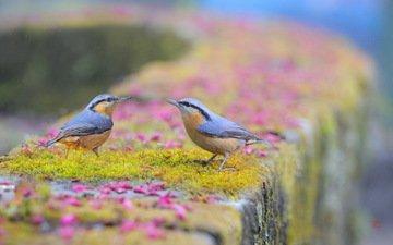 природа, птицы, птаха