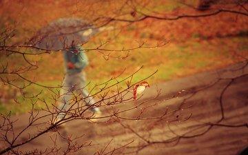 природа, дерево, парк, ветки, осень, человек, дождь, зонт