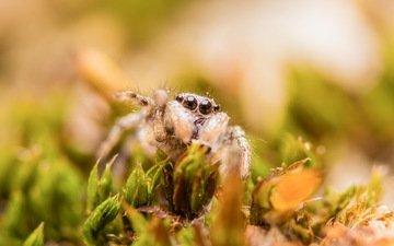 трава, природа, макро, паук