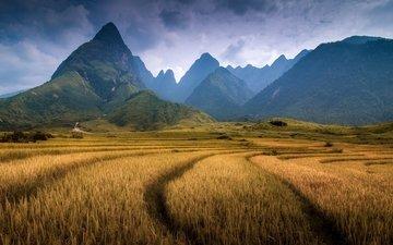 горы, поле, гора, вьетнам, провинция лаокай, фаншипан