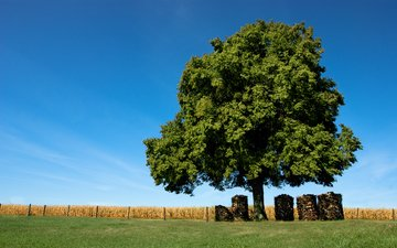 небо, трава, природа, дерево, поле, забор, доски, бревна