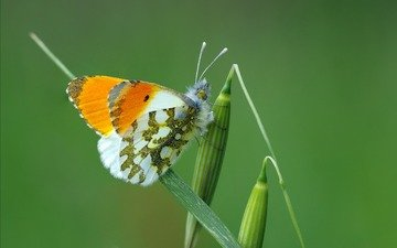 grass, macro, insect, butterfly, wings, plant, green, ziva & amir