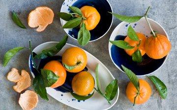 фрукты, плоды, мандарины, цитрусы, verdina anna