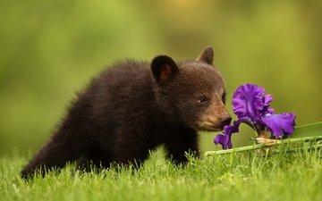 трава, природа, цветок, медведь, медвежонок