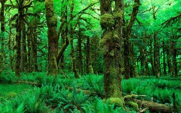 деревья, природа, зелень, растения, лес, листья, мох