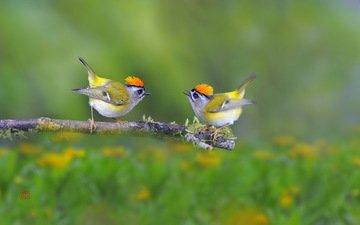 ветка, природа, птицы, птаха