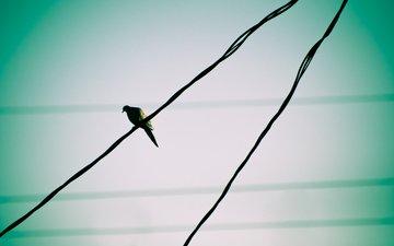 небо, провода, птица, голубь